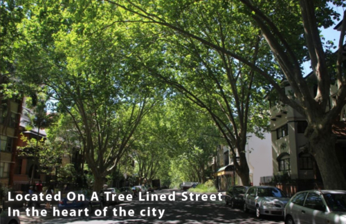 Gallery-Backpacker-hostel-sydney-Tree-Lined-Street